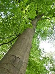 Tuinposter Aan het plafond Herzlicher Baum