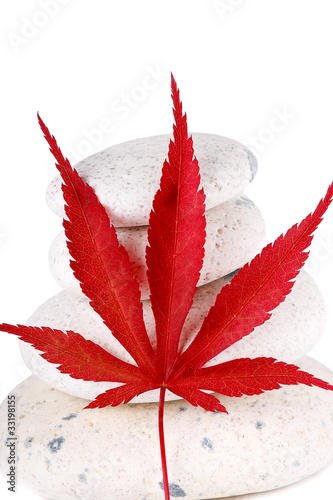 Ghiaia con foglia di acero rosso immagini e fotografie for Acero rosso canadese prezzo