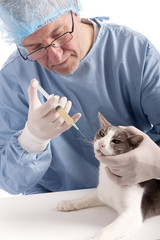 veterinary giving an injection at a cat