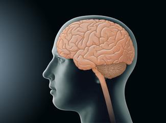 Menschliches Gehirn - Lage