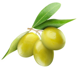 Isolated olives. Three green olive fruits on branch with leaves isolated on white background