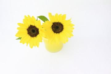 ひまわり Sunflowers