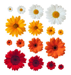 collection of daisies