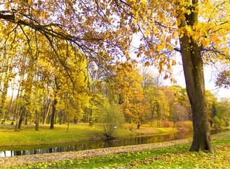 Autumn Nature Foliage