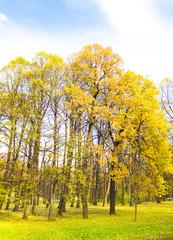 Wood Path Foliage