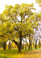 Foliage Wood Path
