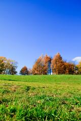 Trees Park Beauty