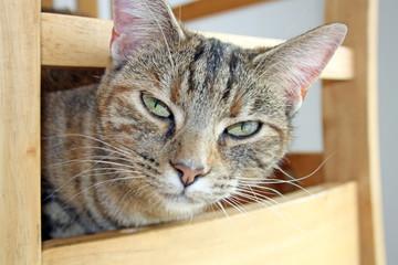 pretty tabby cat