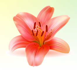 Vector photo-realistic beautiful pink lily