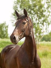 portrait of beautiful mare