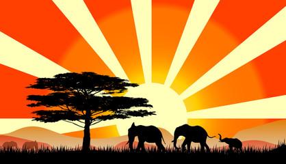 elefanti al tramonto