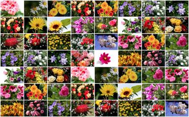 Bunte digitale Bilder Collage