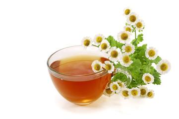 tea and white daisies