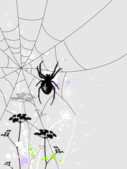 Background with spider