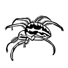 spider vector illustration