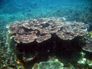 Coral Graden