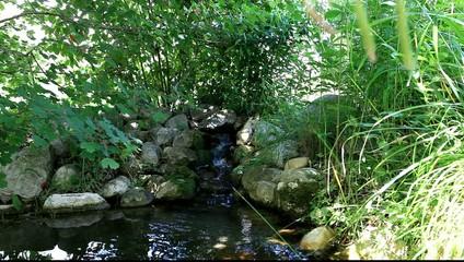 Photos illustrations et vid os de bassin aquatique for Bassin de jardin japonais