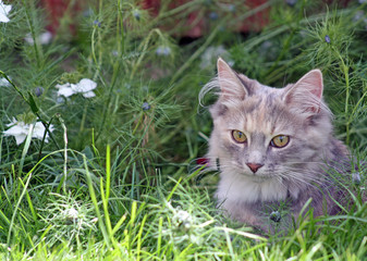 beautiful kitten in the garden with flowers