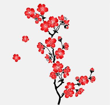 A branch of blooming cherry tree Sakura