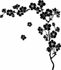 Blooming cherry Sakura branch in ink