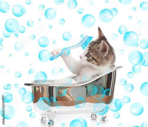 Gattino che fa il bagno immagini e fotografie royalty free su file 33474197 - Bambolotti che fanno il bagno ...