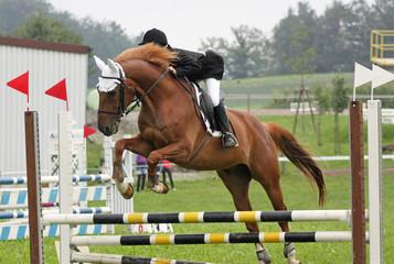 jumping horse 3