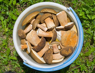 Bucket with mushrooms 10