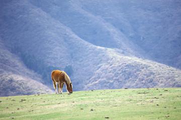 隠岐 西ノ島の馬