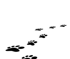 footprints animal