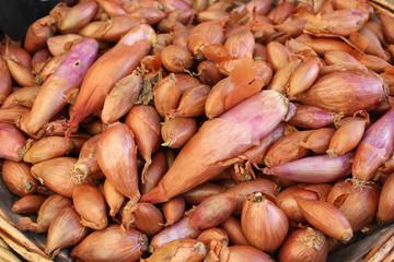 Schalotten (Allium ascalonicum)