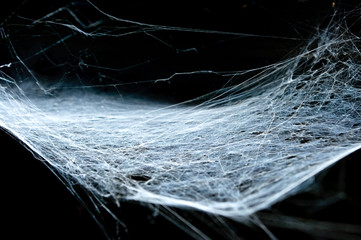 Old cobweb with black background