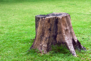 Stump on green grass