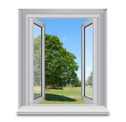 Tree outside window