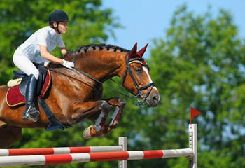 Fototapete - Equestrian jumper - horsewoman and bay mare
