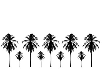 black and white coconut tree