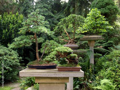 bonsai garten stockfotos und lizenzfreie bilder auf bild 33566508. Black Bedroom Furniture Sets. Home Design Ideas