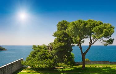 Adriatic sea view at Rovinj. Pine trees in coastal garden.