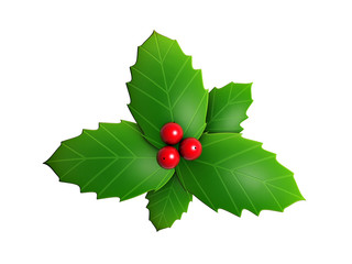 holly leaves and red berry isolated on white background