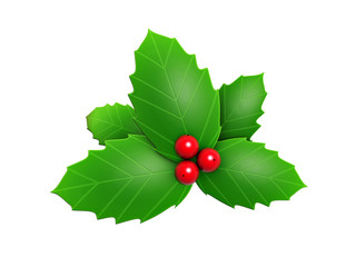 holly leaves and red berry
