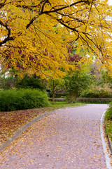 alleyway with paved road to autumn park