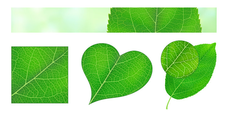 Design elements with green leaf texture