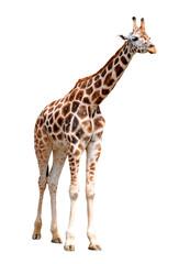 Autocollant pour porte Girafe giraffes isolated