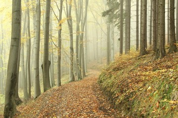 Keuken foto achterwand Bos in mist Forest trail on the border between pine and beech trees