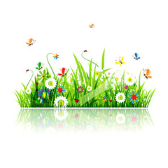 Photo sur Aluminium Coccinelles Summer green meadow for your design