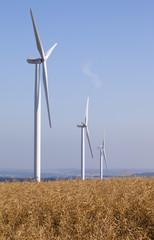alignement d'éoliennes sur champ de colza