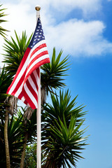 Usa flag and palms on blue sky