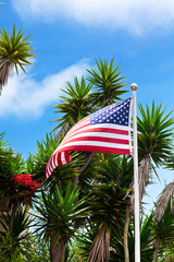 Usa flag and palms on blue sky