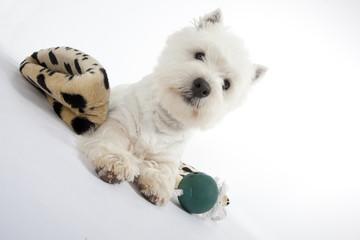 chien allongé sur ses jouets