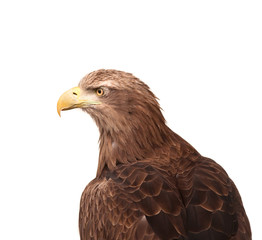 Eagle isolated