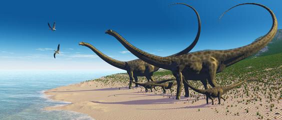 Diplodocus Herd
